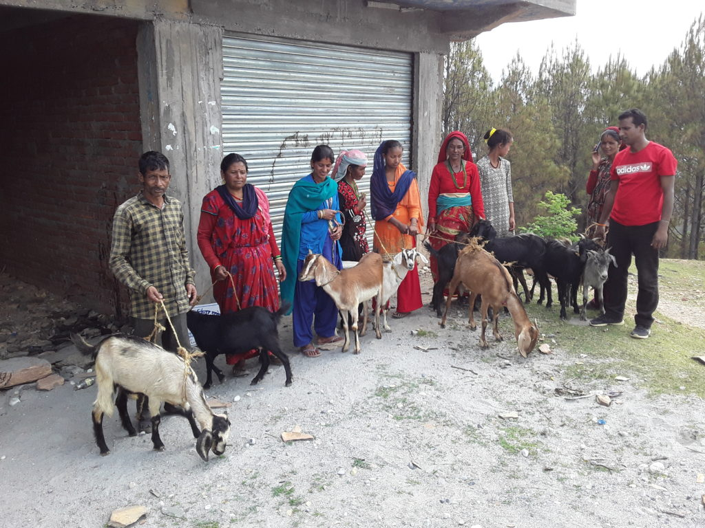 Goat supporting common photo at Silanga, Patan M Baitadi