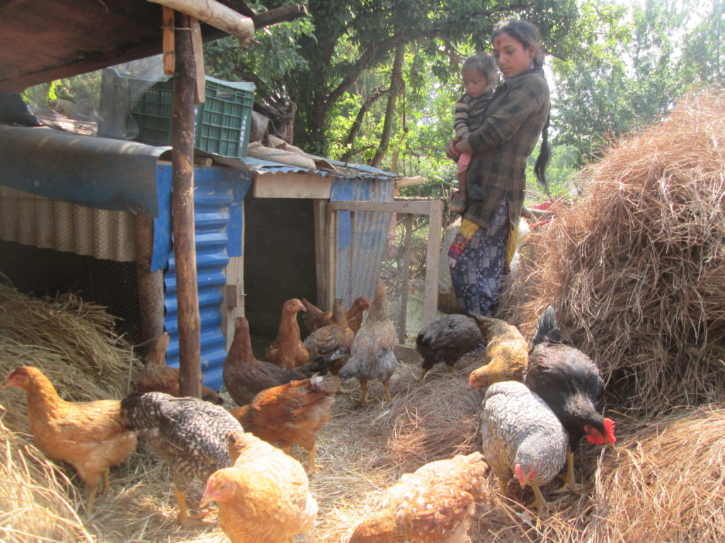 Poultry Farming support to Rekha Kumal at Patan
