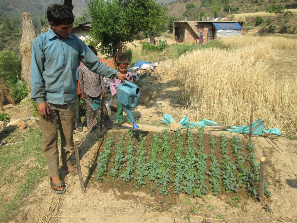 Vegetable farming Mr. Gopal Bhul at Patan
